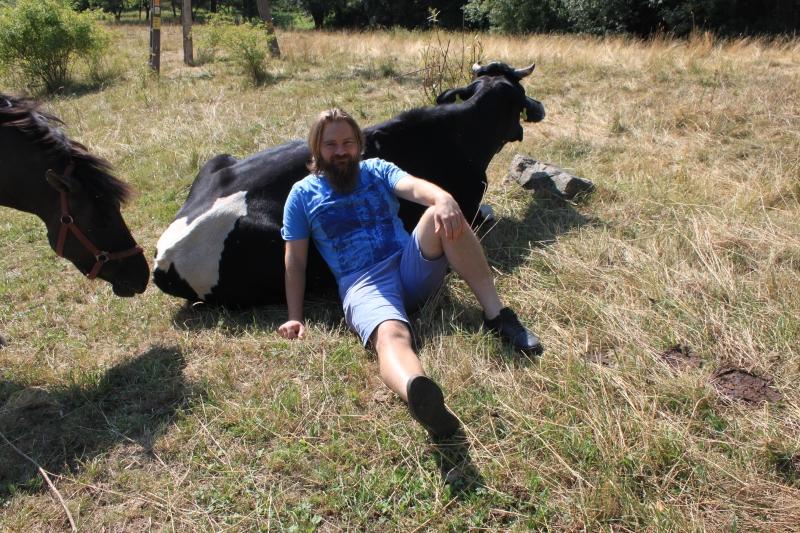 terapia krowami